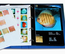 Discus Catalogue by Martin of Malaysia pix