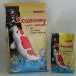 Angel koi economy