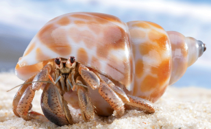 Pet-Care-Hermit-Crab