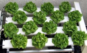 hydroponics-2